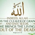 Allah is the Cleaver of the grain